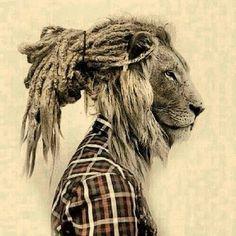 25 Best Rasta Lion Tattoo Drawings Images Lion Tattoo Rasta Lion