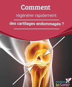Comment régénérer rapidement des cartilages endommagés ? Nous vous proposons aujourd'hui de soigner des cartilages endommagés de manière naturelle mais efficace grâce à une bonne alimentation !
