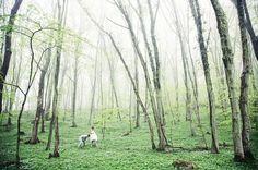 Moody forest wedding woodland