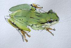 http://randenawalsh.com/portfolio-watercolor/TreeFrog-1_websize.jpg#