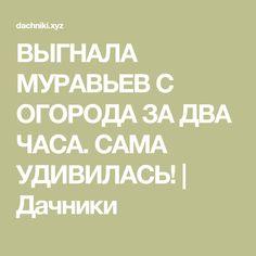 ВЫГНАЛА МУРАВЬЕВ С ОГОРОДА ЗА ДВА ЧАСА. САМА УДИВИЛАСЬ! | Дачники