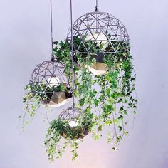 Atelier-Schroeter_geodesic-terrarium - Design Milk Geodesic dome suspension - bold floral design perfect for a different look at a wedding Hanging Terrarium, Terrarium Ideas, Terrarium Plants, Hanging Plant Wall, Glass Terrarium, Decoration Plante, Flower Decoration, Geodesic Dome, Plant Decor