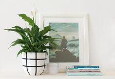 Peace lilies are vibrant and lovely, with verdant leaves that grace any indoor space with a touch of life