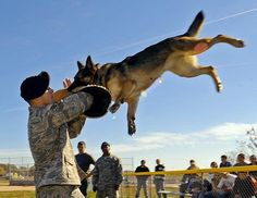 Lackland Air Force Base, Home of the Schoolhouse for Puppies and Future Military Working Dogs