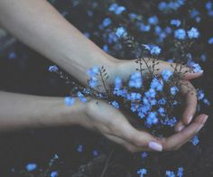 'forget me not' by Annija Muižule. One of my favorite flowers since I was a little girl! Flower Aesthetic, Blue Aesthetic, Blue Flowers, Wild Flowers, No Rain, Nature Tattoos, Forget Me Not, Back To Nature, Ravenclaw