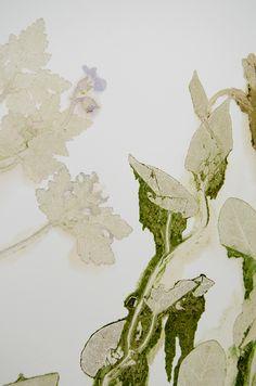 Anne Ten Donkelaar Flower pigments