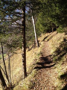 Entlang des Kräuterweges in Weissenbach