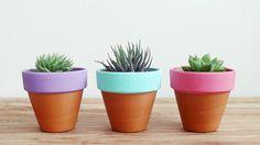 Így nem nyírod ki végre a szobanövényeidet