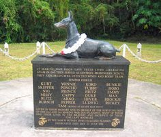 """Dobermans were used in both WWI and WWII assisting soldiers.   In honor of these dogs a memorial was created on the island of Guam. 25 of the Marine War Dogs died in 1944 at the Battle of Guam. All were buried in Guam in what is now the first war dog memorial, """"Always Faithful,"""" marked by a beautiful life-size bronze statue."""