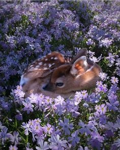 All cozy in the flowers #aww #cute #cutecats #dinkydogs #animalsofpinterest #cuddle #fluffy #animals #pets #bestfriend #boopthesnoot