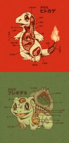 Pokemon Anatomy