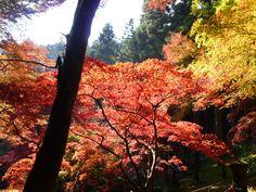 Agano(Sacrario), Chichibu Saitama Japan