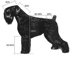 growth chart black russian terrier - Google-Suche