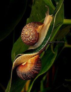 Reptiles, Lizards, Animal Magic, Tier Fotos, Weird And Wonderful, Animal Photography, Time Photography, Beautiful Creatures, Animal Kingdom