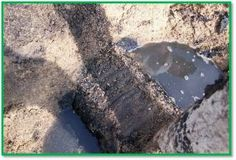 Who's to blame? Check out the top 3 reasons for septic system failures. Septic System, Blame, Good To Know, Tips, Check, Counseling