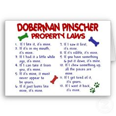 funny pictures of doberman pinschers - Google Search