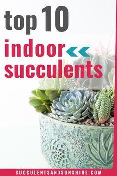 Not all succulents do well indoors but this free guide will help you know which to choose! How To Water Succulents, Succulent Soil, Types Of Succulents, Propagating Succulents, Growing Succulents, Indoor Succulents, Planting Succulents, Indoor Plants, Plant Table
