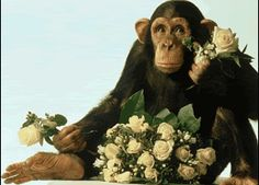 monkey love photo: Wedding Monkey WeddingMonkey.gif