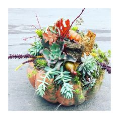 You'll Never Carve a Jack-O'-Lantern Again After Seeing These Chic Succulent Pumpkins