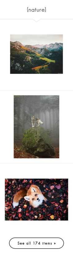 """""""{nature}"""" by wickedcrystal ❤ liked on Polyvore featuring animals, backgrounds, pictures, image, fantasy, scenery, aesthetic, pic, icons and pictures blue"""