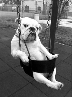You know, maybe your dog likes the swings? Or at least just take em to the park! #dogs http://www.youmustlovedogsdating.com