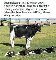 What a mooving story!