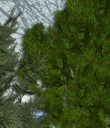 RDNA Winter Foliage - Evergreens 1