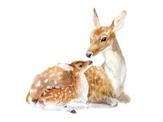 Watercolour Drawings, Watercolor Paper Texture, Watercolor Print, Watercolor Paintings, Woodland Art, Woodland Nursery, Bump Painting, Painting Art, Deer Family