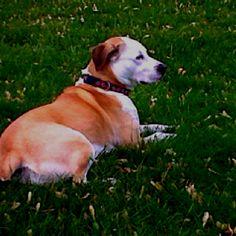 My dog, Lucy.