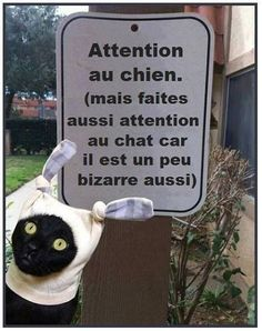 Beware of the dog. (But also watch out for the cat; he's a little weird too.)