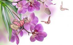 Flores, ORQUIDEAS, Mariposas