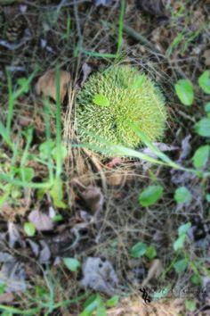 Circle of Life by Danielle Andrew http://whurrledpeas.deviantart.com/