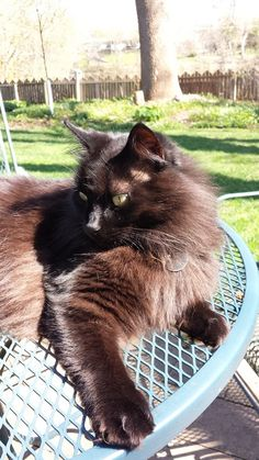 Lazing in the sun... black cats are beautiful!  Always CraveCute: Dancing Round the Maypole