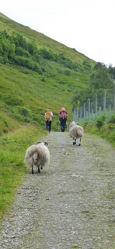 The West Highland Way is a marked walking trail that extends 154 kilometres miles) from Glasgow to Fort William in Scotland. The Route The[Read More. Backpacking Trails, West Highland Way, Fort William, Walking, Walks, Hiking
