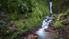 Szkocja, Hrabstwo Clackmannanshire, Wąwóz Dollar Glen, Wodospad, Rzeka, Kamienie, Rośliny