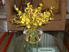 Chuva-de-ouro é árvore ornamental - Cassia fistula - A chuva-de-ouro é uma árvore ornamental decídua, de floração espectacular, com seus belos cachos pendentes de flores douradas. De porte médio e crescimento