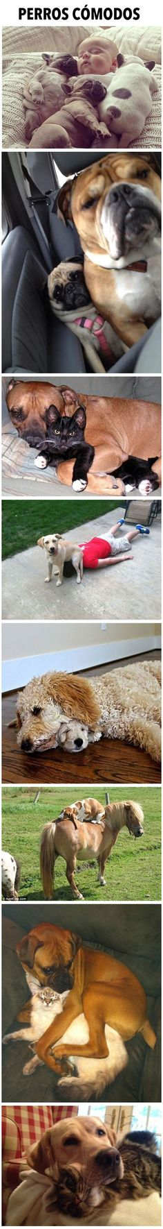 Perros cómodos. #humor #risa #graciosas #chistosas #divertidas