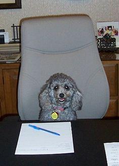 "Sunrise of Lynn Valley (B.C.) Welcomes New House Dog ""Coco""!   Sunrise Senior Living"