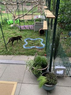 Outdoor Cat Enclosure, Outdoor Cats, Aquarium, Plants, Goldfish Bowl, Aquarium Fish Tank, Plant, Aquarius, Planets