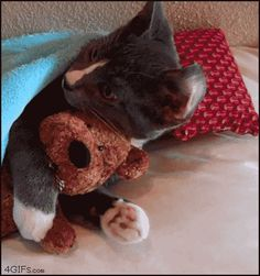 cat snuggle tight (gif)