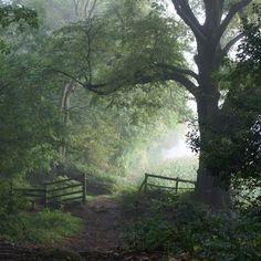 Misty woodland walk