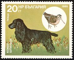 Eurasian Woodcock stamps - mainly images - gallery format