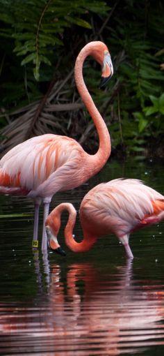 Flamingo lawn ornament model at Sarasota Jungle Gardens