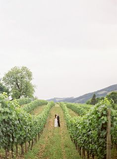in the vines  Photo by Jill Thomas Photography