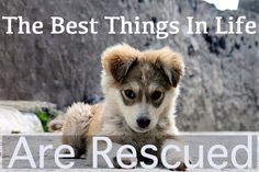 The Best Things In Life Are Rescued! #adoptdontshop #dogs If you love dogs as much as we do, share the love. We help dogs get out of kill shelters and use social media to get the message out. Thanks everyone!