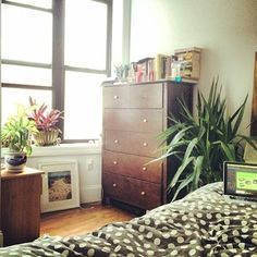 Brooklyn apartment with lots of plants