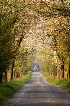 Country lane in spring (no location given) by Michael Brüss / 500px