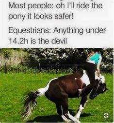 - Horses Funny - Funny Horse Meme - - Under . Horses Funny Funny Horse Meme Under . The post Under . appeared first on Gag Dad. The post Under . appeared first on Gag Dad. Funny Horse Memes, Funny Horse Pictures, Funny Horses, Cute Horses, Pretty Horses, Horse Love, Beautiful Horses, Funny Animal Memes, Horse Humor