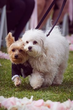 Pets in a wedding party