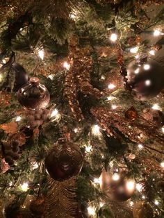 Master tree at night 2014